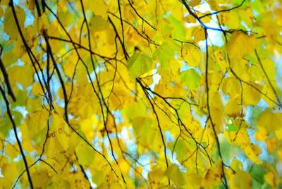 Осень Осень 2020 желтые листья макро сентябрь