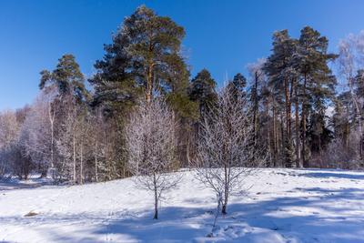 Оттепель зима оттепель
