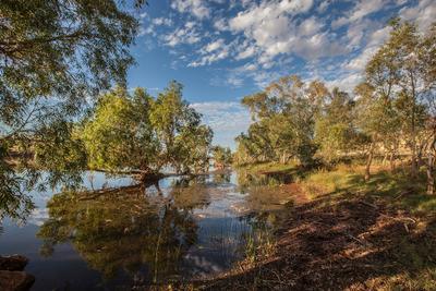 Под сенью эвкалиптов река эвкалипты Австралия облака