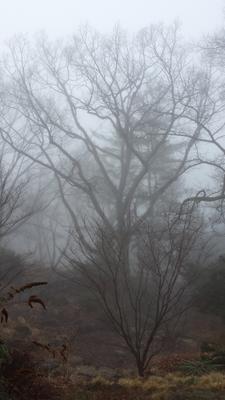 3 утро лес туман