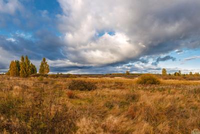 Мутасьевские поля. мутасьево моршанск моршанский район тамбовщина тамбовская область