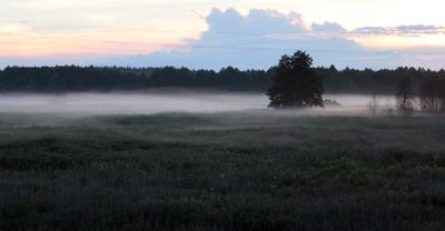 Вечерний туман. Туман
