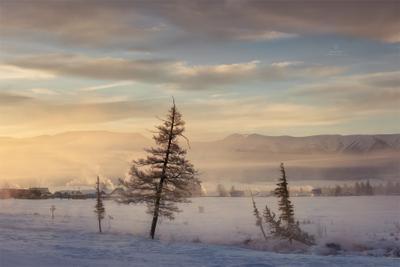 Зимние силуэты Алтай Россия Горы зима Пейзаж Природа курайская степь Северо-Чуйский хребет туман