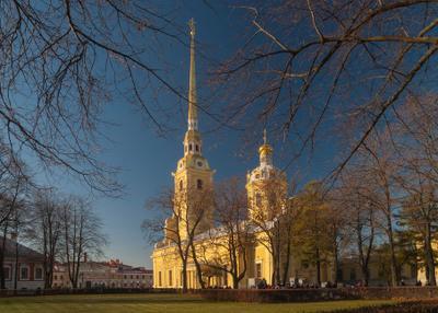 В паутине ветвей Санкт-Петербург Петропавловская крепость Петропавловский собор