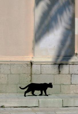 История про город теней кот