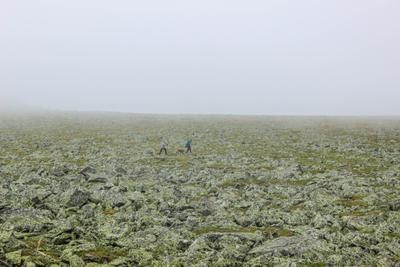 Блуждающие в тумане...