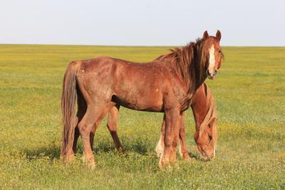 Лошади острова Водный дикие лошади заповедник Ростовский www.treefrog.ru