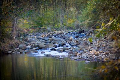 *** Река лес осень