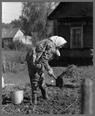 Дачница  Урожай картошка