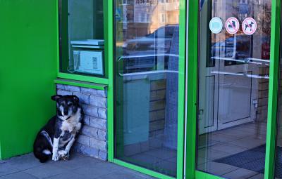 Собакам вход воспрещен