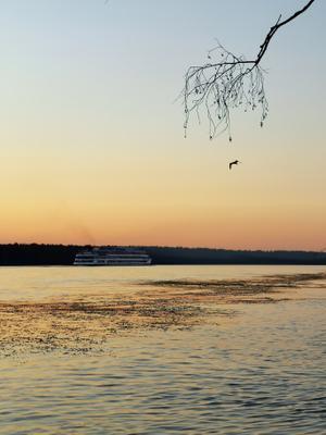 *** р.Нева теплоход река дерево ветка чайка