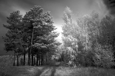 летне-зимняя (для берга) березы, осень, сосны, ИК