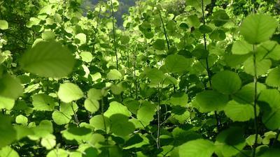 зеленая фантазия