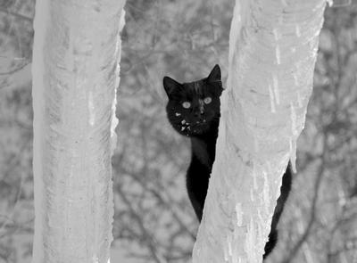 *** черный кот зима труба теплоцентраль снег лед иней