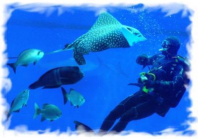Анука Отними! подводный мир скат аквалангист