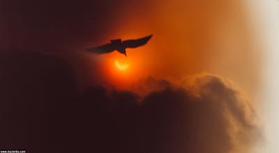 Затмение солнце птица затмение солнечное репортаж облака небо голубь орел силуэт месяц