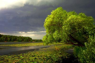 Перед грозой пейзаж природа гроза тучи река дерево лето