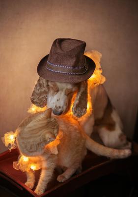 Просто любовь, или как кошка с собакой кошка собака дружба кокер-спаниель
