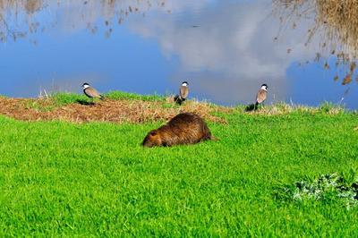 На фоне весны Хула. Заповедник на севере Израиля
