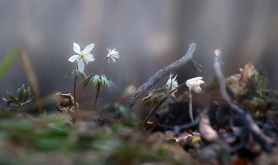 неизбежность Весны