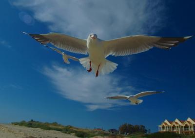 Лети ко мне чайка