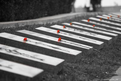 Память аллея славы мемориал памятник цветы гвоздики монумент память