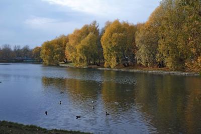 Осень Москва парк осень