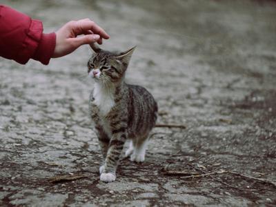 Знакомство #2 котик, кот, знакомство