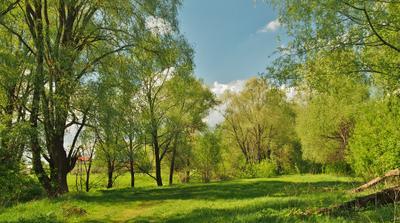Новая жизнь. пейзаж весна