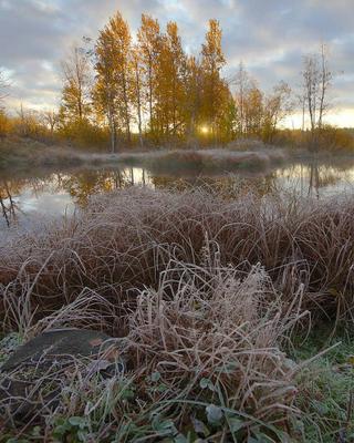Осенний пруд Осень рассвет