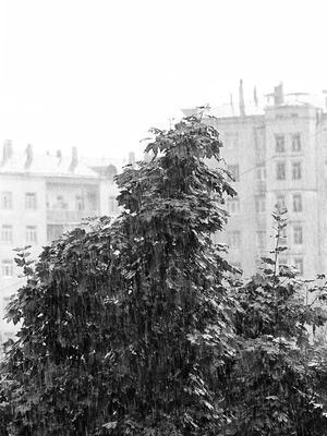 Дождь мой дом дерево дождь