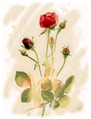 Роза, естественно...) сканограмма, сканография