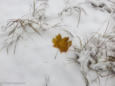 Последний на первом. снег кленовый лист желтый