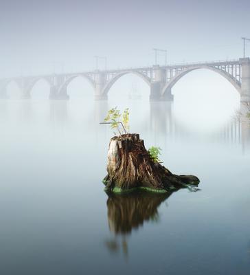 Life force город пень река вода отражение мост утро туман осень квадрат минимализм длинная выдержка