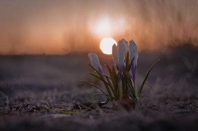 Восход встречает группа.. весна цветок макро