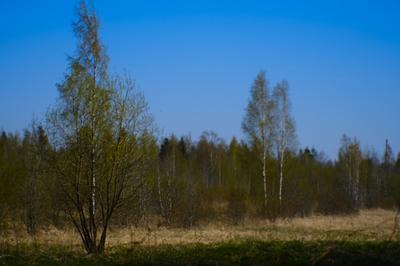 За шаг до Новолуния, 11 мая (2) весна май поле