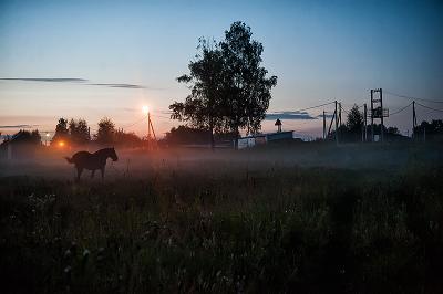Перед рассветом лошадь туман
