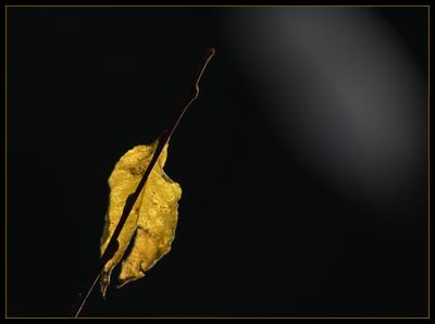 Осеннее настроение.. осень ноябрь