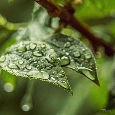 как же не хочется, чтобы лето заканчивалось.. макро капля зелень лето прогулка