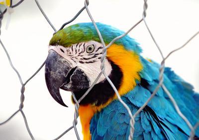 Свободу попугаю!!!