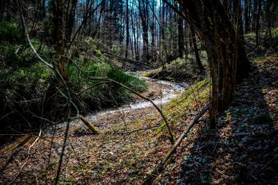 Весенние прогулки пейзаж природа вода Россия овраг лес весна ручей