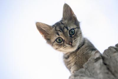 Крымский кот кот