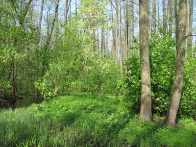 лесной шум***