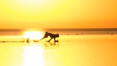 свобода закат вода собака лайка Цуцык бег свет море штиль свобода