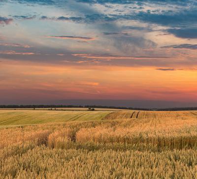 Летние вечера закат вечер поле небо облака лето