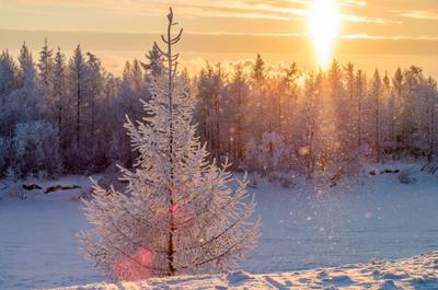 Огненное солнце Крайнего Севера Зима снег ноябрь новый уренгой