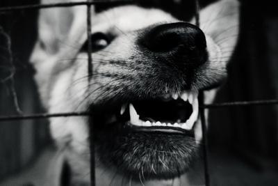 свободу попугаям собака щенок решетка клетка сетка клыки