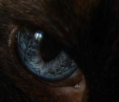 Бездна макро глаз кошка