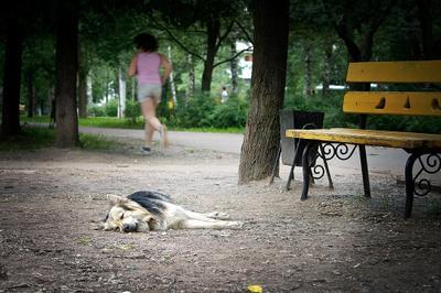Ничего не хочу москва, собака, девушка, парк