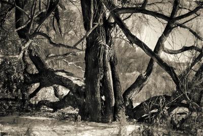 Дерево на берегу оз. Смолино Южный-Урал